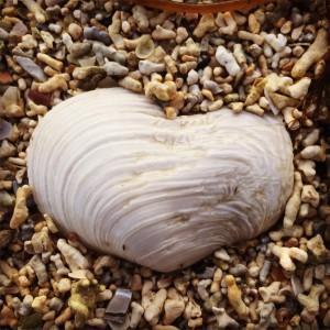 Verdibasert hjerte