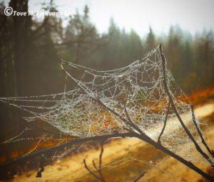 Spindelvev 2