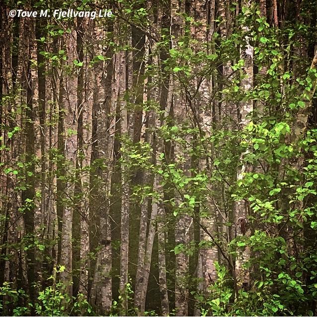Nr. 102: Ser Du Ikke Skogen For Bare Trær?